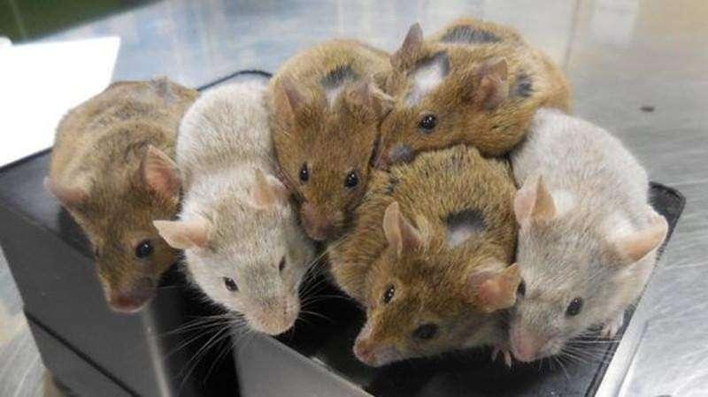 تعرف على سبب إنتشار الفئران في عدن