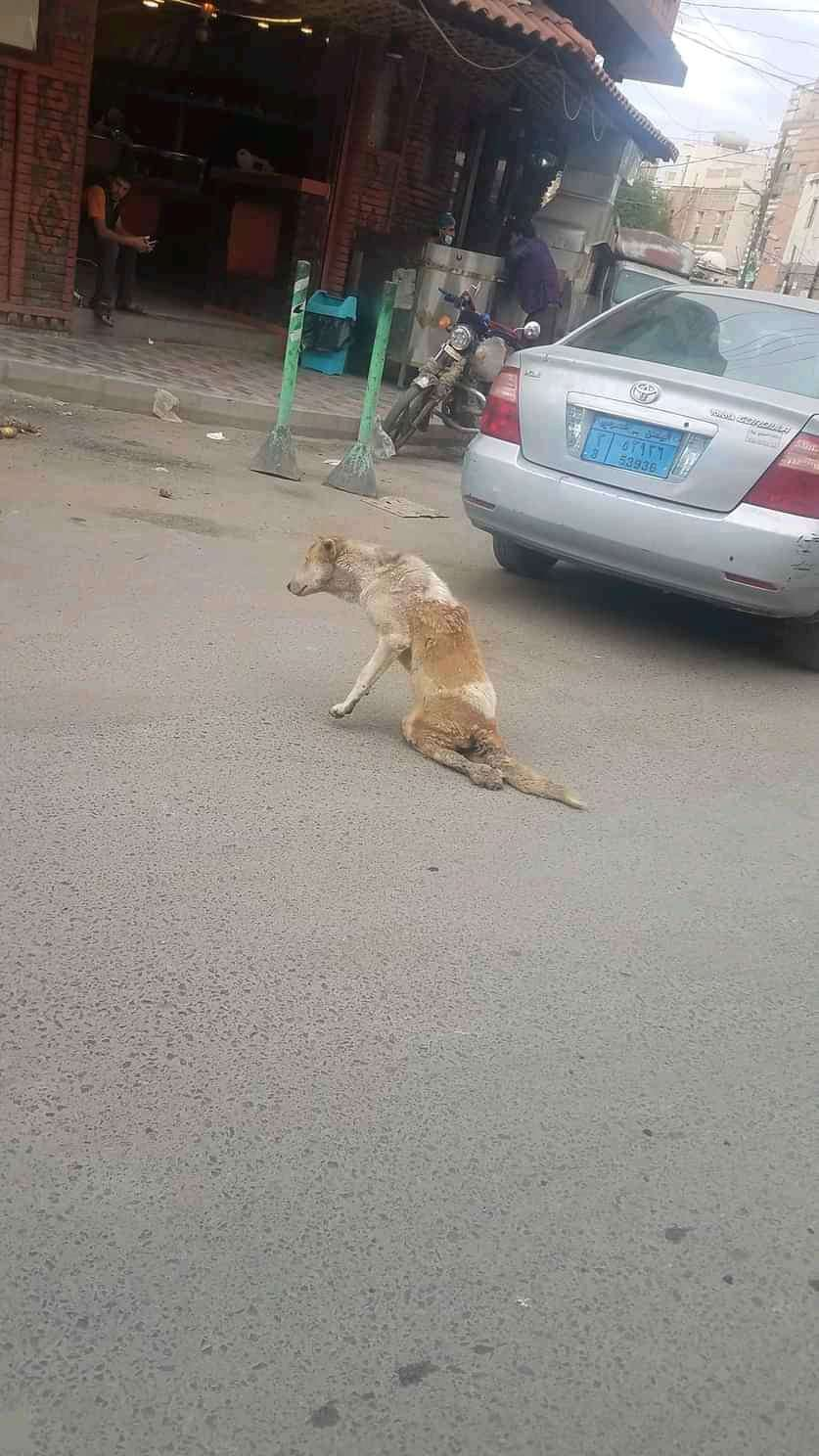 بالصور .. تعرف على قصة كلب دهُس وضُرب عليه الرصاص فأنقذه شاب من الموت بصنعاء !